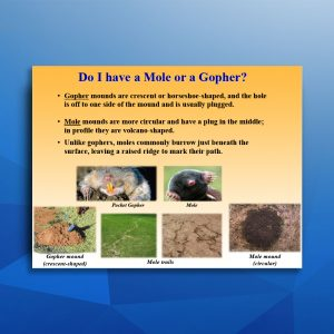 Mole vs Gopher